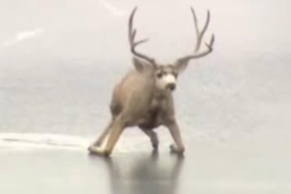 bambi walking on a frozen lake