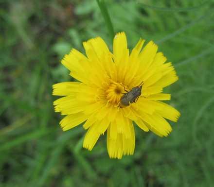 黄色い花と虫