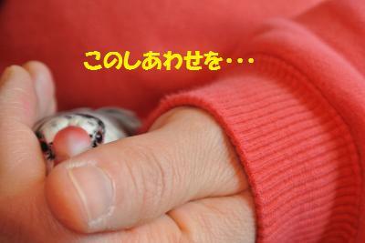 DSC_2694貂・convert_20141225212533