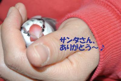 DSC_2696貂・convert_20141225212557