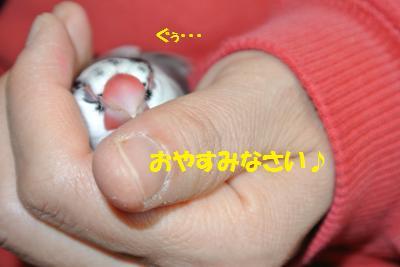 DSC_2697貂・convert_20141225212621