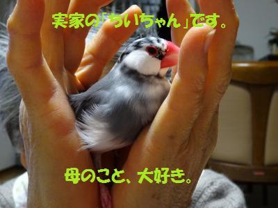 DSC00633_convert_20150110213252.jpg