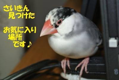 DSC_2407_convert_20141221225718.jpg