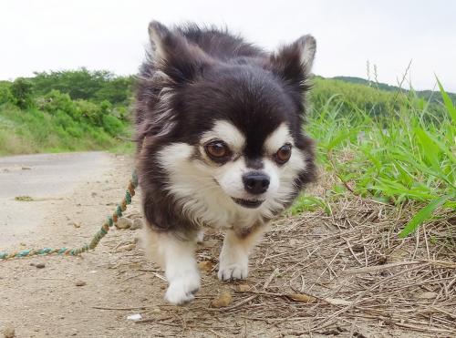 お散歩だよ~♪