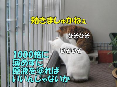 150710-06.jpg