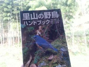 150416野鳥