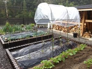 150417菜園