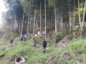 150422竹林