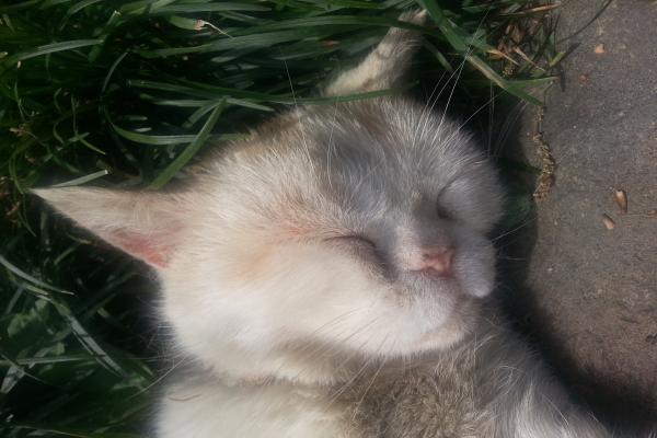 猫寺 ぶさかわ昼寝