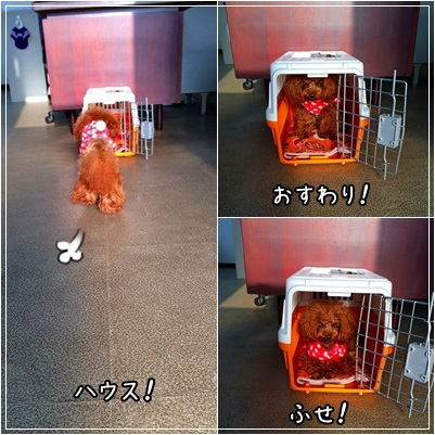 cats_201503131700238f8.jpg