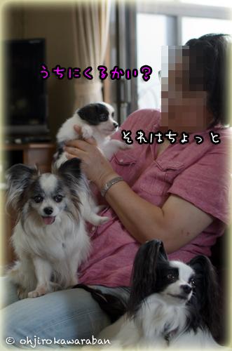 16*16-DSC_4633