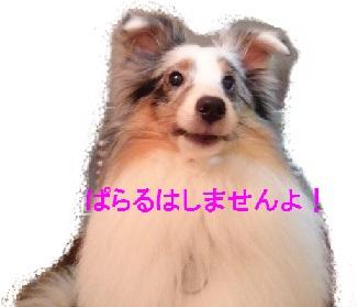 DSC_000020.jpg