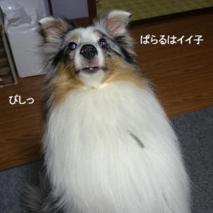 DSC_5592.jpg