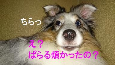 DSC_6248.jpg