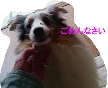 MOV_0243(5).jpg