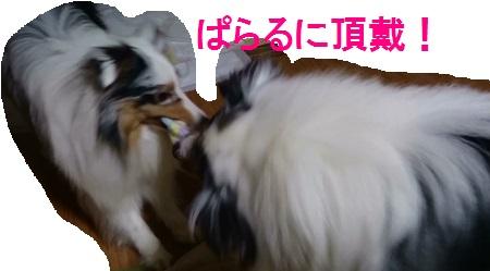 MOV_0720(1).jpg