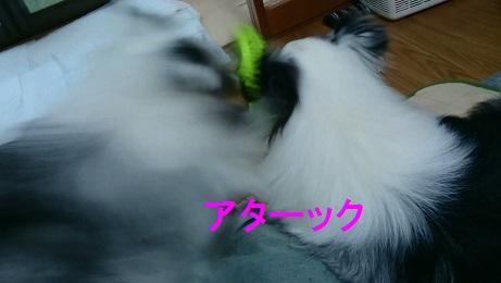 MOV_0791(10).jpg
