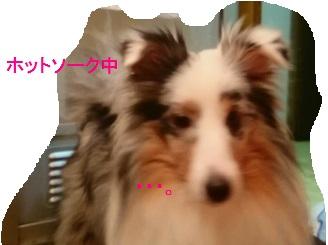 MOV_0803_000(4).jpg