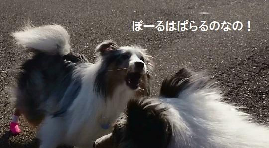 MOV_5774(5)_2015052702174719b.jpg