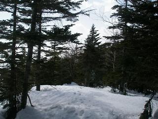 樹林に囲まれた山頂
