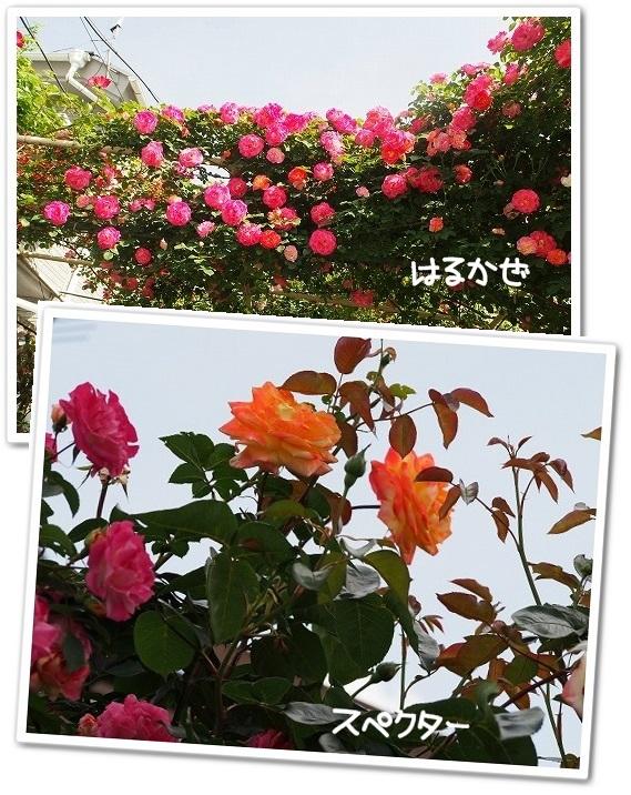 春風&スペクター