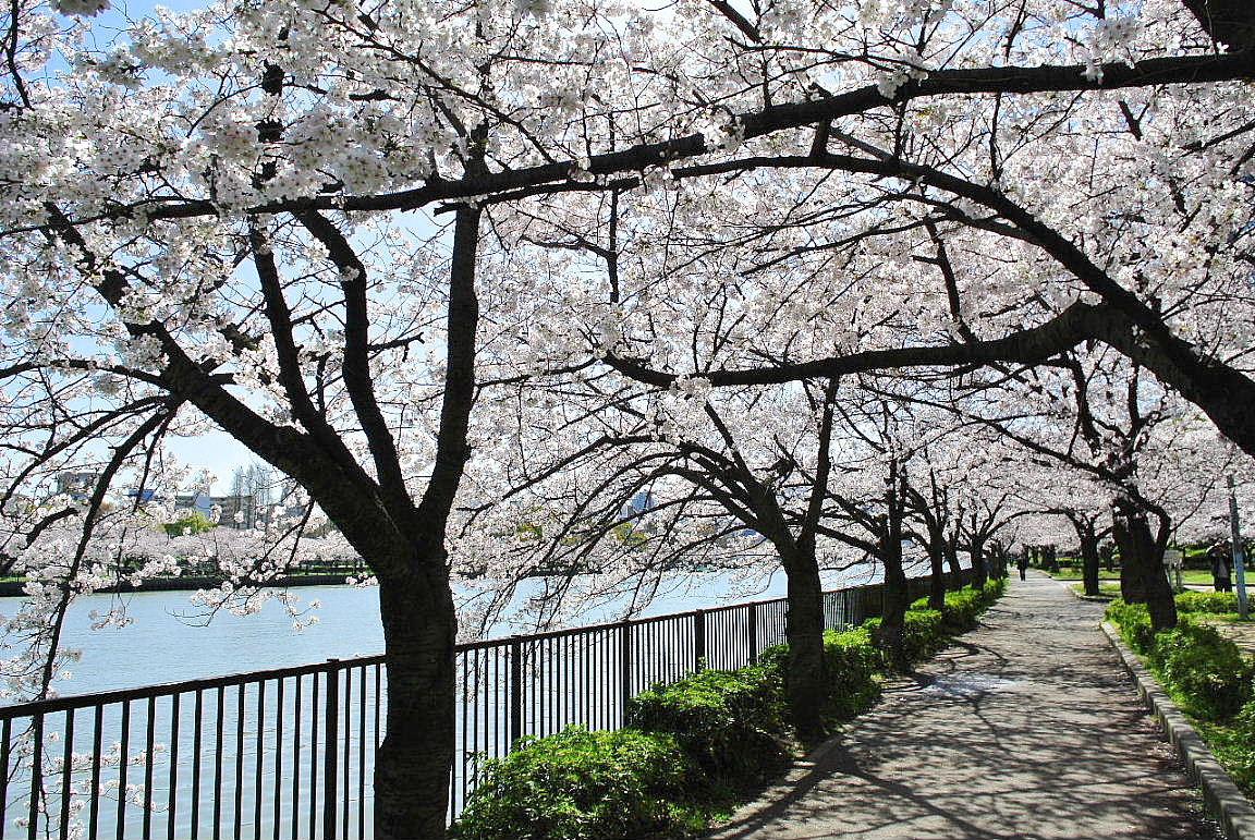 1桜 img_0