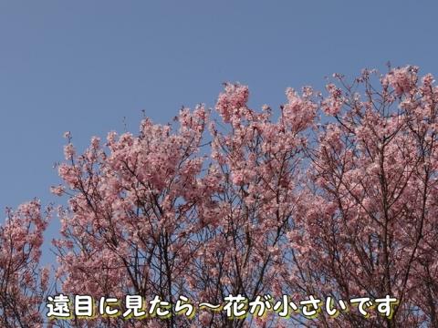 040_201504020057494f2.jpg