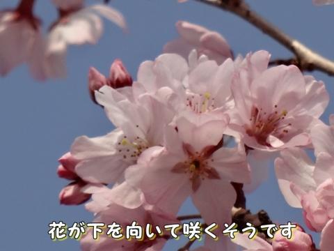 042_20150402010054f13.jpg