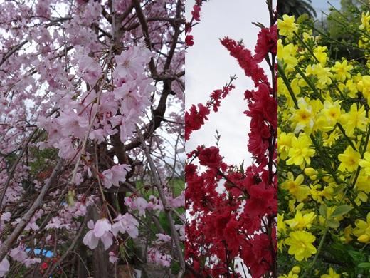 公園のお花2