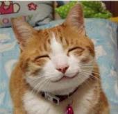ニコニコ猫
