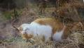 岩合さん猫