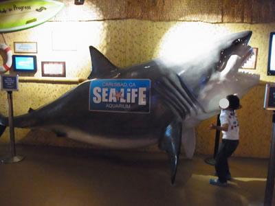 サメのオブジェ