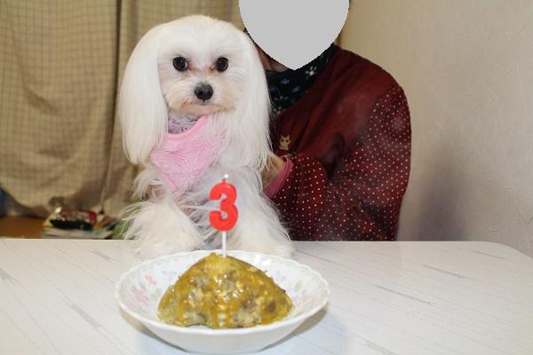 2015.01.31 お誕生日のうまうま♪+手術頑張ってきます!-3