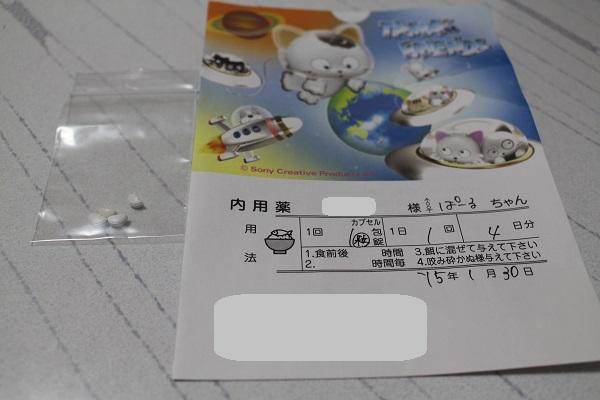2015.02.08 手術+翌日のぱーる-3