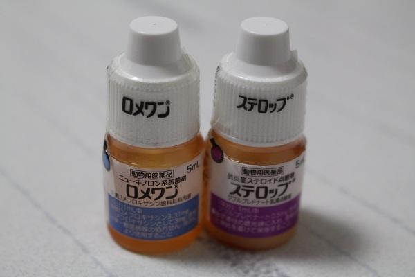 2015.02.08 手術+翌日のぱーる-5