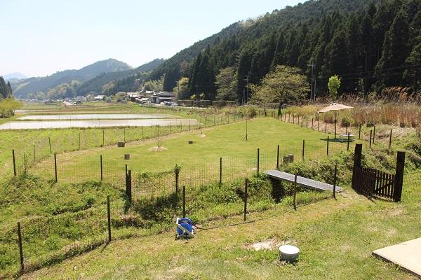 2015.05.07 ちわわん②-1