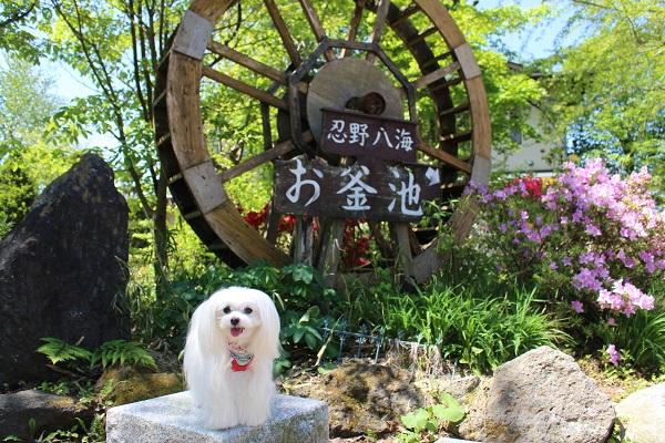 2015.05.19 信州旅行1日目②忍野八海-21