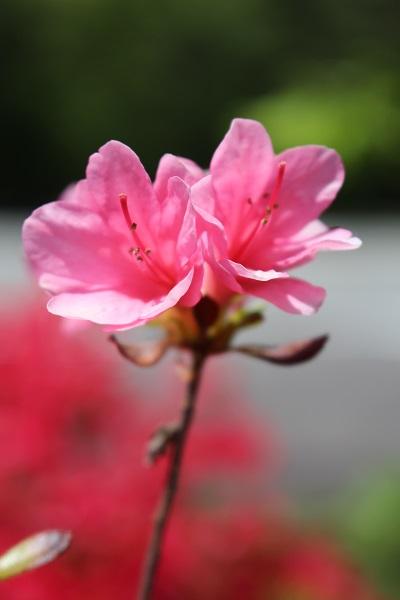 2015.05.22 信州旅行1日目⑤花の都公園-18