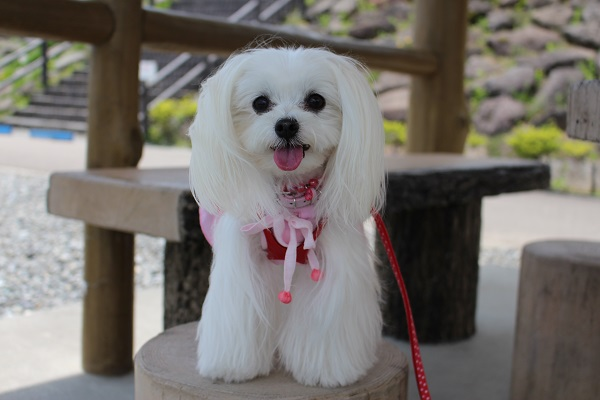 2015.05.27 信州旅行2日目②まきば公園-21