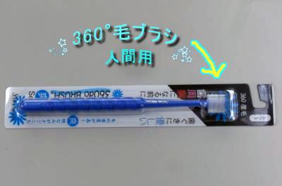 CIMG0343_sc.jpg