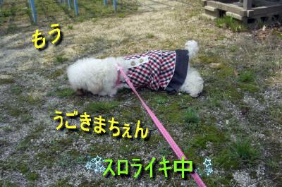 CIMG0398_sc.jpg