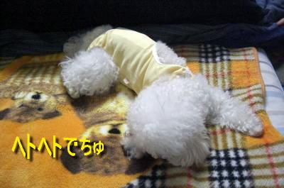 CIMG4639_sc.jpg