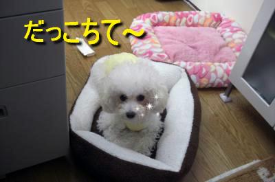 CIMG4669_sc.jpg