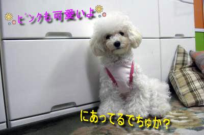 CIMG4676_sc.jpg