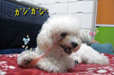 CIMG4685_sc.jpg