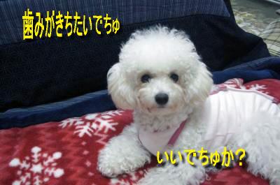 CIMG4695_sc.jpg