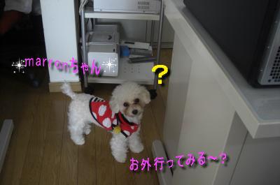CIMG9460_sc.jpeg