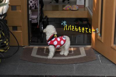 CIMG9468_sc.jpeg