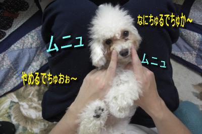 CIMG9724_sc.jpeg