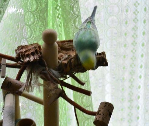 ディジーたんも遊ぶ1あの枝に飛び移る